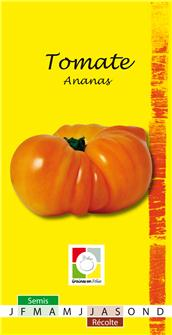 Graines de tomate ananas ou pineapple